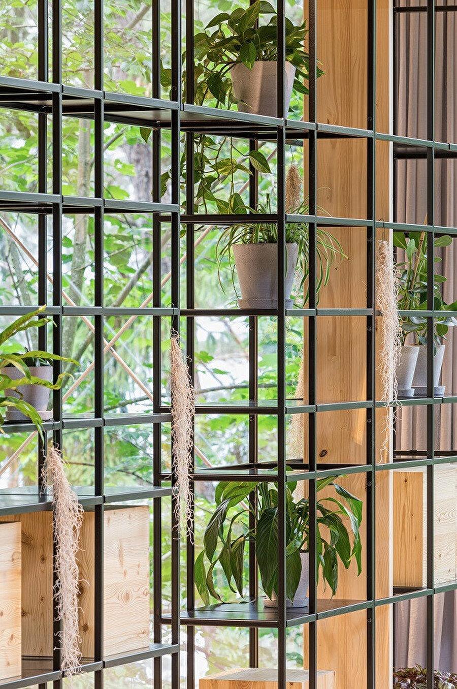 Bitkilerle doldurulan raflar, görsel açıdan projeye katkı sağlıyor.