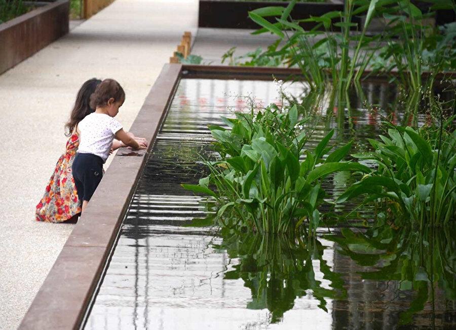 Havuzlarda yetiştirilen bitkiler ile su bahçeleri oluşturuluyor.