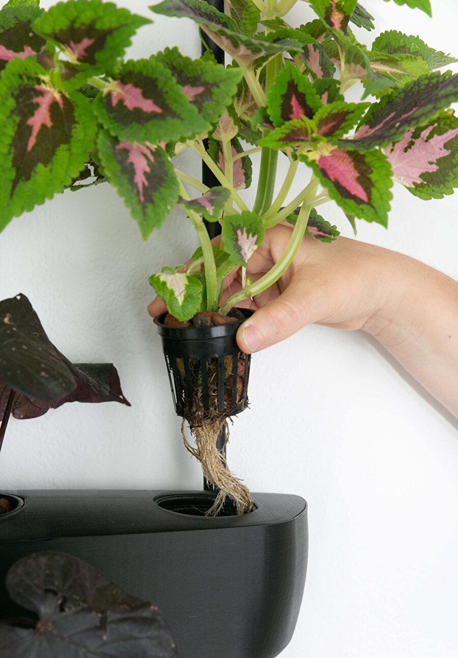 Grow sistemiyle, çok az toprak kullanılarak üretim sağlanabiliyor.