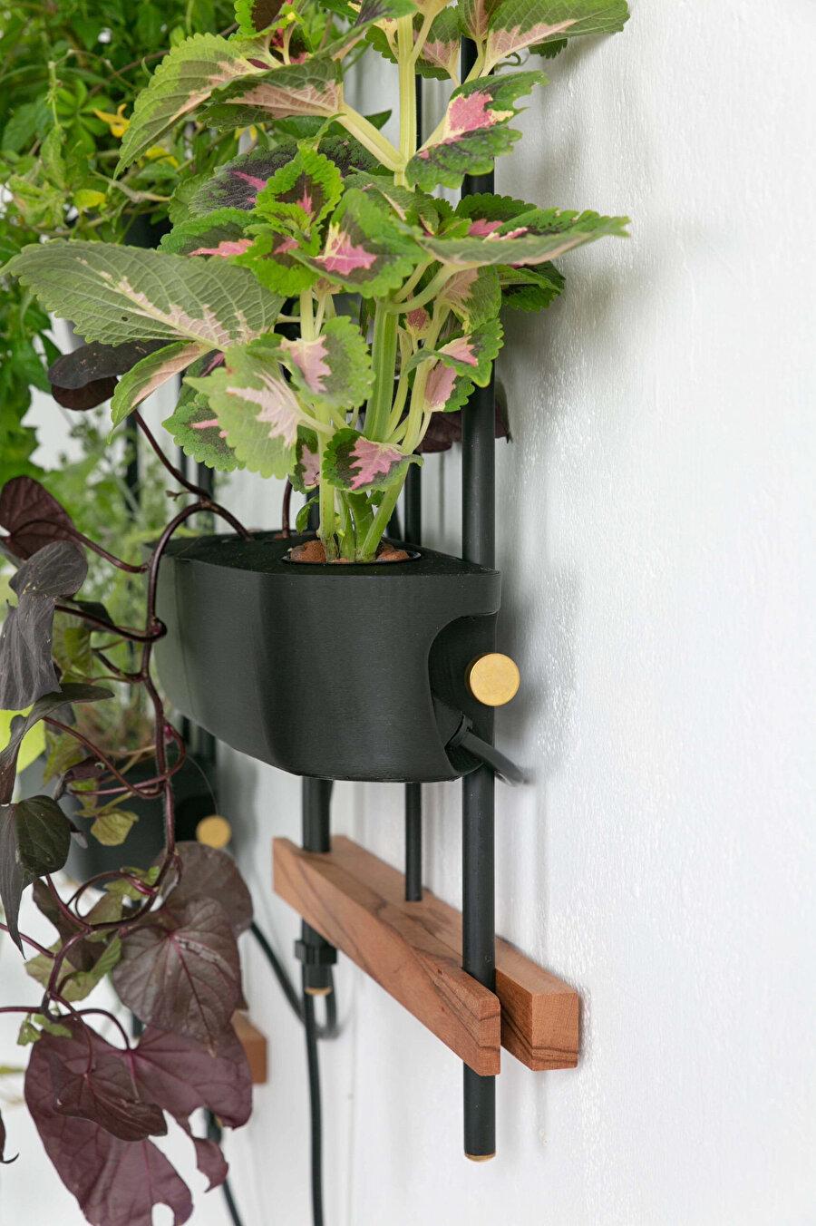 Bitkileri ve bitkilerin kök sistemlerini desteklemek için genellikle kum, turba, vermikülit, perlit, hindistan cevizi, kaya yünü veya genleştirilmiş kil agregası gibi malzemeler kullanılıyor.