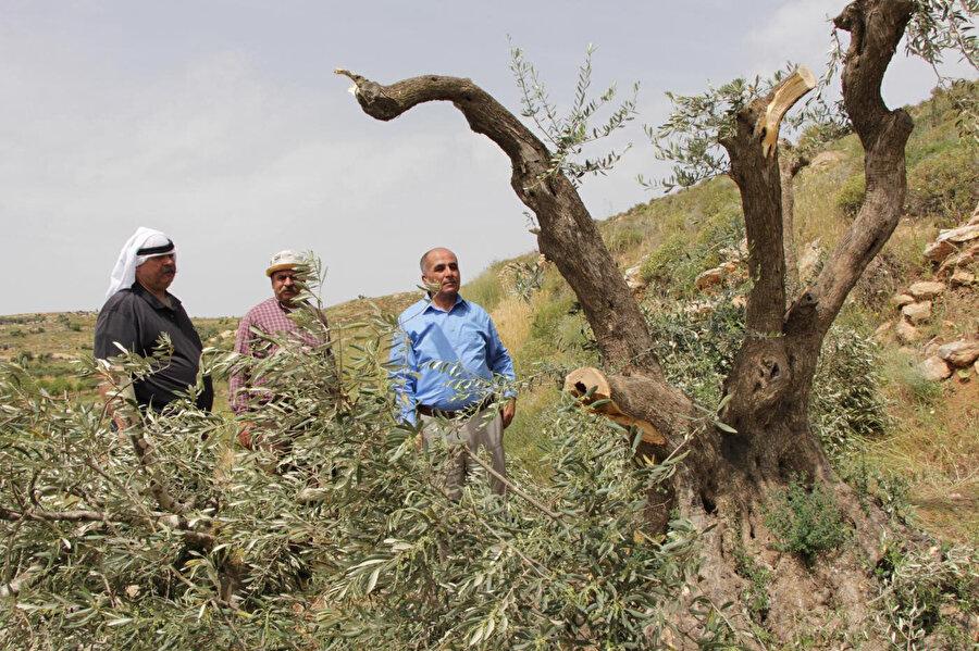 Batı Şeria'da 2019 yılında İsrail tarafından gerçekleştirilen zeytin ağacı kıyımına ait bir fotoğraf.
