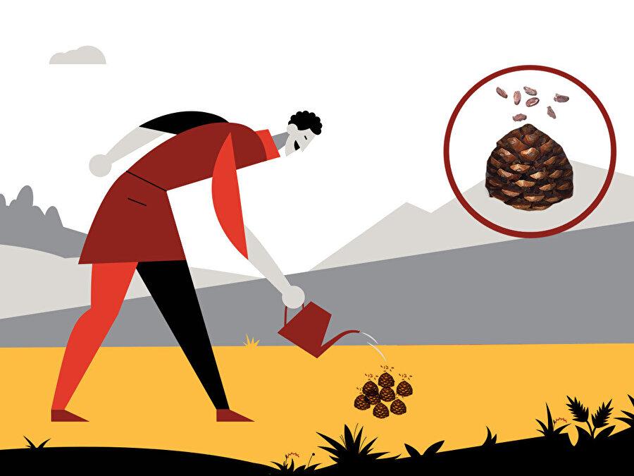 Erozyon, sel ve kül taşınması olmaması için toprak üzerine yandıktan sonra kesilmesi gereken ağaçların kozalaklı dalları serilerek yağmurun darbe etkisi azaltılabilir. Bu işlem aynı zamanda kızılçam tohumlarının sahaya yayılmasına da katkı sağlayacaktır.