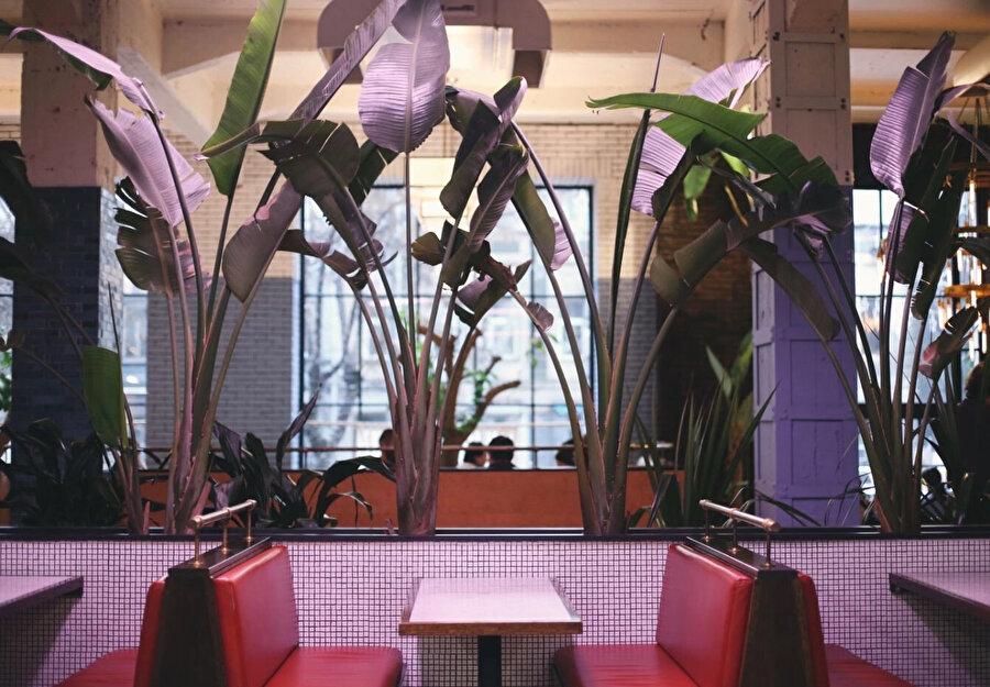 Bitkiler, iç mekanda bir seperatör olarak kullanılıyor.