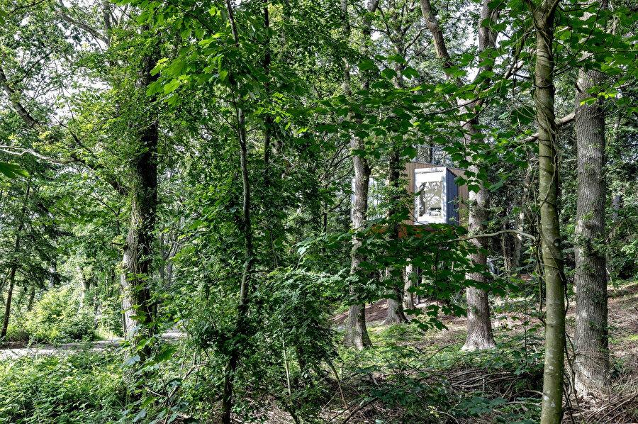 Kabinler ağaçların arasında kamufle oluyor.
