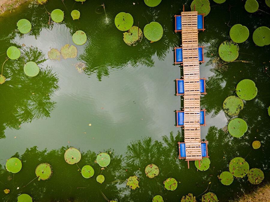 Brezilya, dünyadaki yağmur ormanlarının yarısından fazlasını oluşturan Amazon Havzası'nda yer almaktadır.