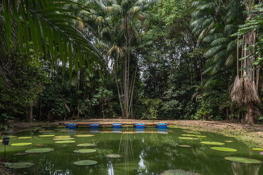 MUSA canlı müzesi Amazon'daki karmaşıklık, zengin sosyal ve biyolojik çeşitlilik üzerine çalışmalar yapıyor.