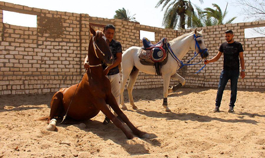 Eğitim sahası içindeki atlar.