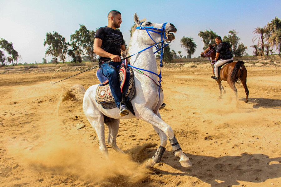 Dimu köyünde yetiştirilen farklı cinsteki atlar.