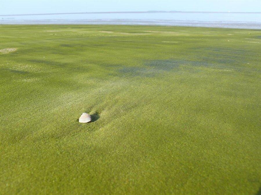 Kourou Green Beach                                      Fransız Guyanası'nda yer alan Kourou Green Beach isminden de anlaşıldığı üzere yeşil kumlara sahip. Güney Amerika'da bulunan plajın sırrı ise 'Olivin kristali'… Kumsalda magnezyum ve demir açısında zengin olan olivin kristalleri bulunuyor. Kristaller renklerini kuma verince böylesi güzel bir manzara ortaya çıkıyor.