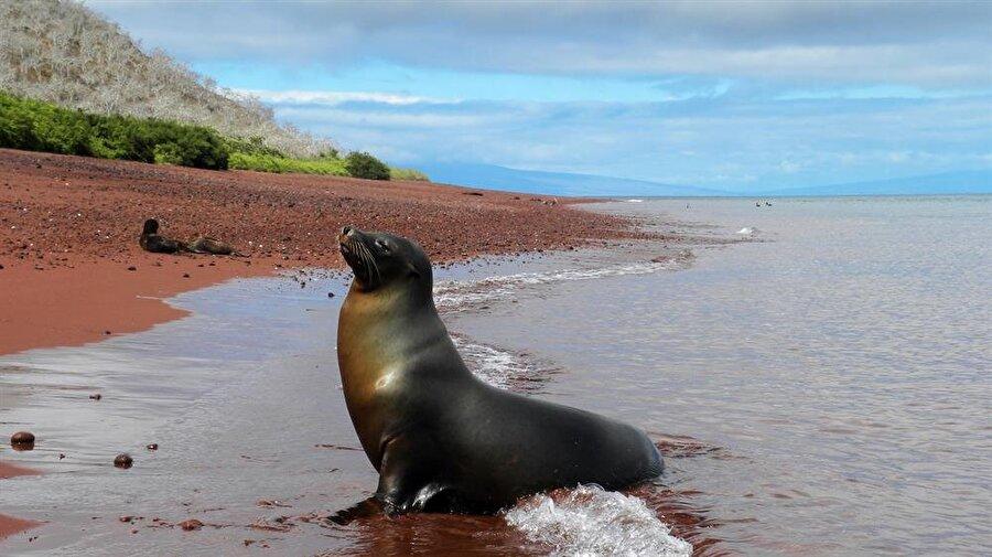 Rabida Galapagos Red Beach                                      Ekvador'a bağlı takımadalardan olan Rabida Adası'nda kırmızı kumların bulunduğu bir plaj var. Kırmızı kumların sebebi ise, ölü mercanlar… Söz konusu bu kumların demir açısından son derece zengin olduğu uzmanlarca belirtiliyor.