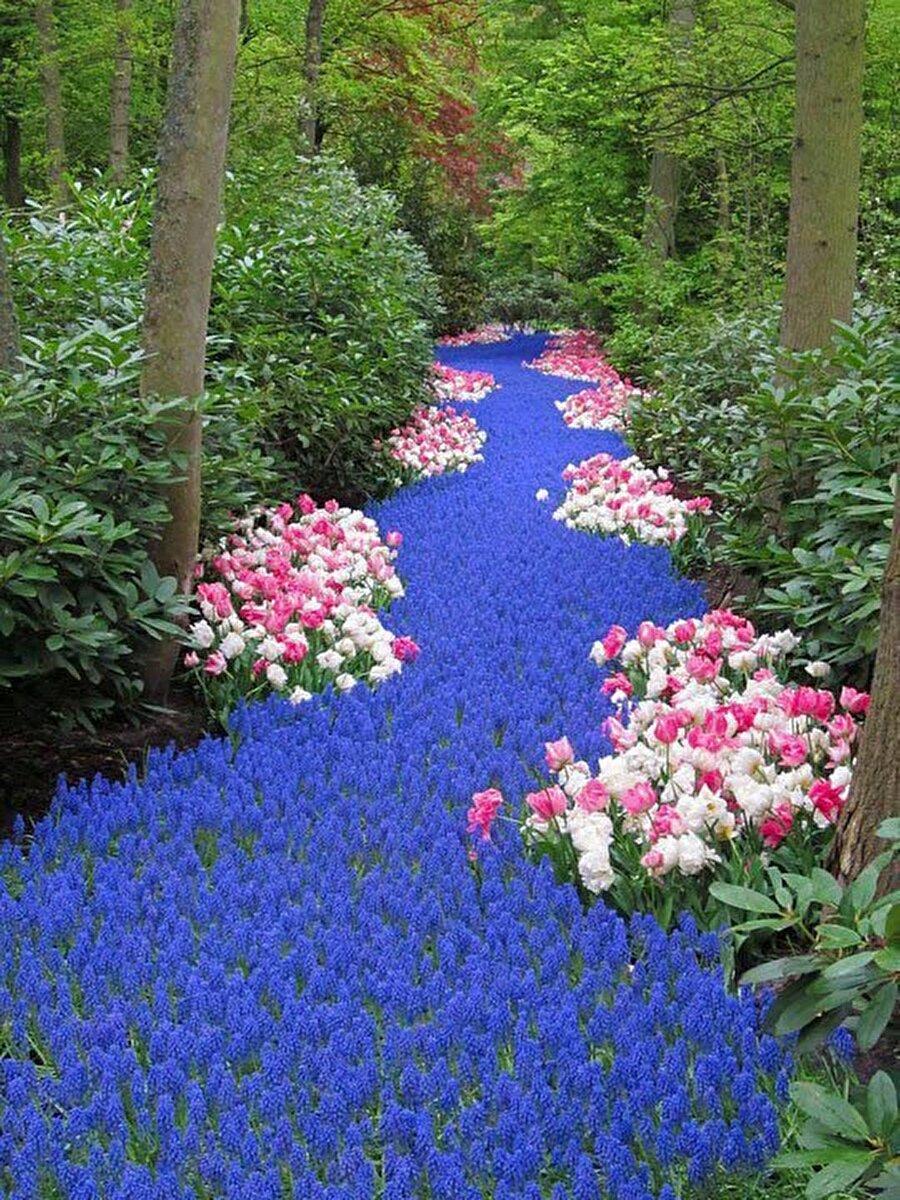 Hollanda, Çiçek Nehri                                                                                                                                                                                                                               Bu çiçek kokulu nehre hayran kalacaksınız.