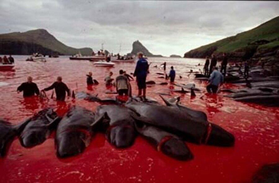 Japon makyaj malzemesi için balina öldürme - Ticaret                                                                                                                Pek çok kozmetik üründe, özellikle de parfümlerde kullanılıyor.  - Lüks tüketim  Japonya'nın balina avından sağlanan balina eti ve balina yağı, her yıl Japonya'da 4 milyon yen karşılığında satılıyor. Japonya'da balina eti, sadece zenginlerin midesine girebilen lüks bir yemek. 2000 yılında Japonya balina avını Kuzey Pasifik'e taşıyarak ve Sperm ve Bryde adlı iki yeni türü de av kapsamına dahil ederek, IWC'yi yok saymıştı. Uluslararası tepkilere rağmen, Japonya avlanmayı sürdürüyor. Balina avcılığı programlarına ayrılan kaynaklar artırılıyor ve ticari balina avcılığı yasağının kaldırılması için yoğun çaba sarf ediliyor.