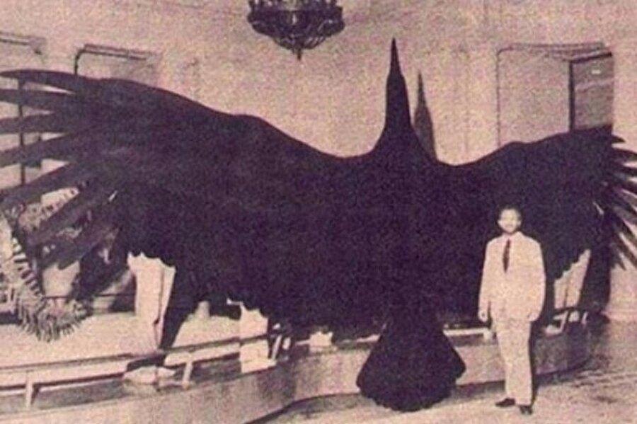 Dünyanın bilinen en büyük kuşu olan son Argentavis'in resmi