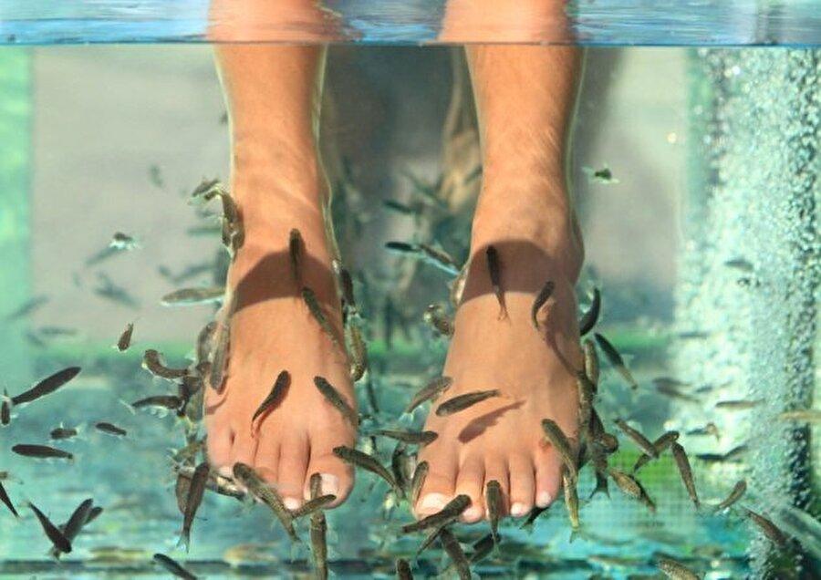 Kangal balığı Kangal balıkları ciltteki ölü derileri temizliyor.