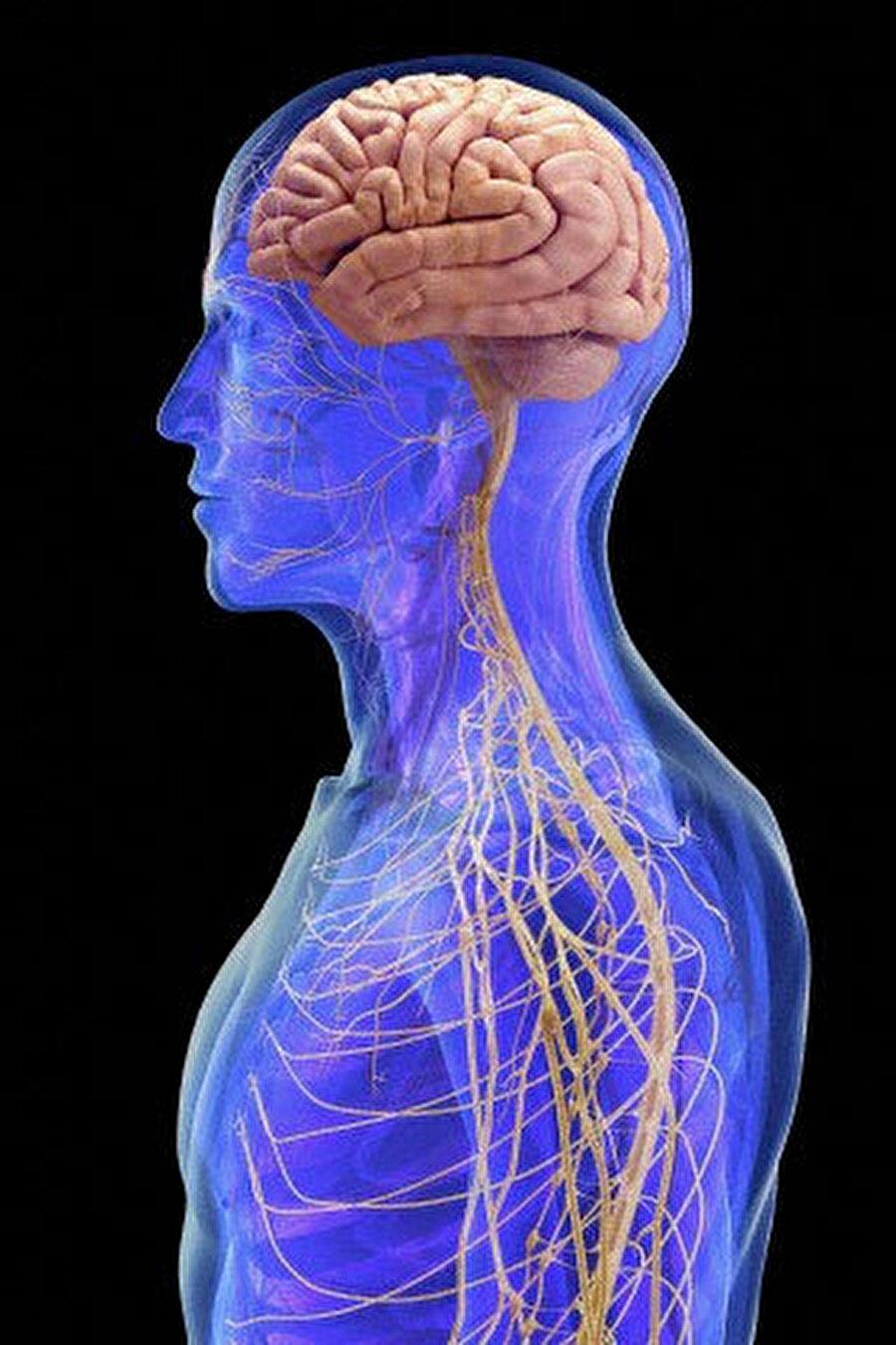 Beden ve zihin bağlantısı                                      Zihnimizin bedenimizi kontrol ettiğini ve fiziksel hareketlerimize onun karar verdiğini biliyoruz ancak beynin tüm bu idare sistemini nasıl gerçekleştirdiği ve bedenimize nasıl komutlar verdiği bilimsel olarak çözülebilmiş değil.