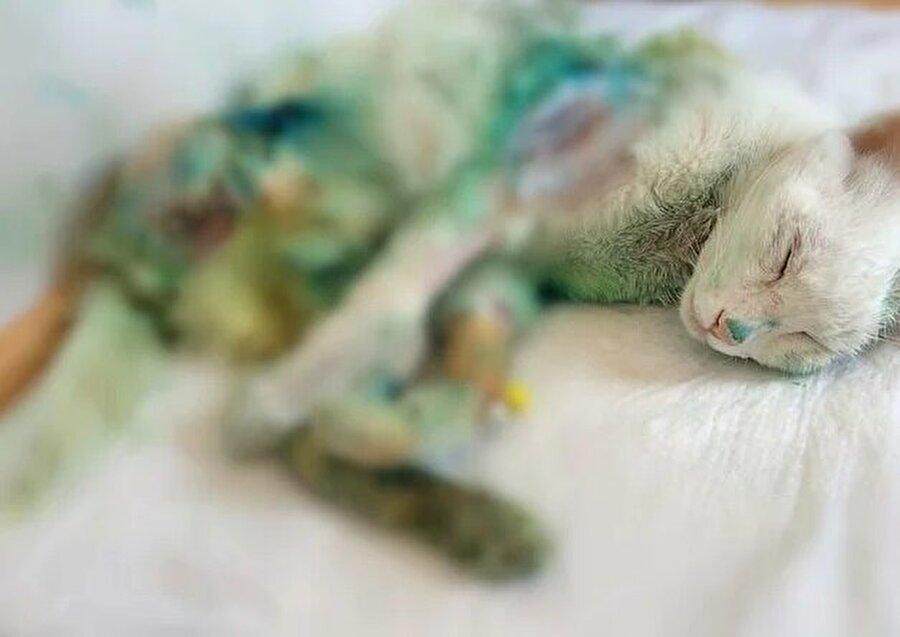 Gözleri görmüyor, tek bacağı yok Hayvanseverlerin karara yönelik tepkileri sürüyor, change.org sitesinde 'Kürekle dövülen Muro kedi için adalet' adında bir kampanya başlatıldı.  Gördüğü şiddet nedeniyle aylar süren tedavileri sonucu bedeninde hasarlar kalan Muro'nun kulakları duymuyor, gözleri görmüyor ve tek bacağı yok.