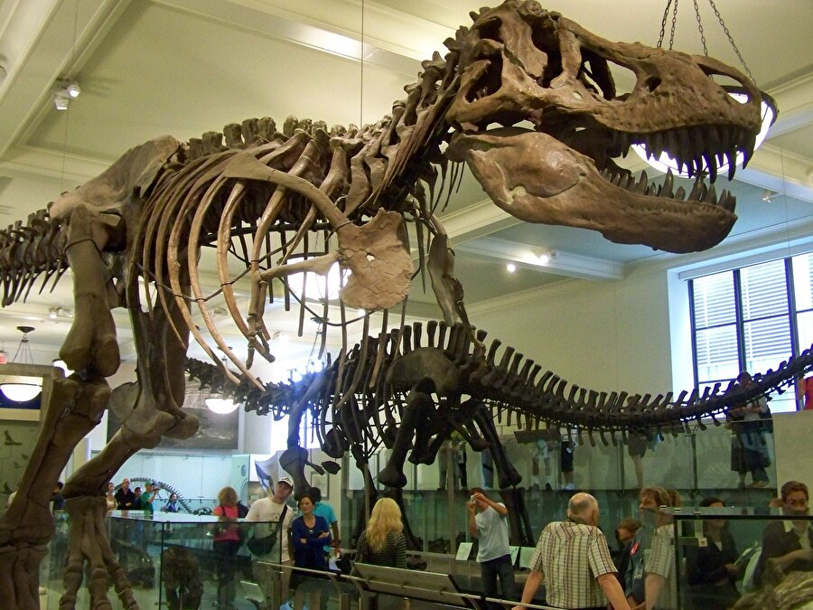 Doğal Tarih Müzesi, New York                                                                                                                New York'ta bulunan Doğal Tarih Müzesi'nde doğal yaşama dair 32 milyon eser bulunuyor. Dev dinazorlar, köpek balıkları, mamutlar, canlı kelebekler, dev ağaç gövdeleri başta olmak üzere doğa hayatına dair bütün eserleri ücretsiz olarak görebilirsiniz.
