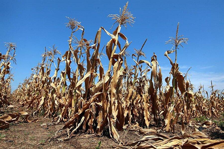 Avrupa Sıcak Hava Dalgası (2003) Avrupa, kavurucu sıcaklarla geçen yaz aylarına alışkın değil. Bu nedenle 2003 Avrupa sıcak hava dalgası başladığında hazırlıksızdılar. Ukrayna'daki buğdayın %75'inin sıcaklardan dolayı kavrulması Avrupa genelinde büyük sıkıntıya yol açtı. Sıcak hava birçok ülkede sağlık krizine neden oldu. 1540'tan bu yana görülen en sıcak ve kurak dönem boyunca yalnızca Fransa'da 15.000, Avrupa genelinde ise 70.000 insan hayatını kaybetti. Sıcaklıklar orman yangınlarına ve devam eden dönemde sele de sebep oldu.