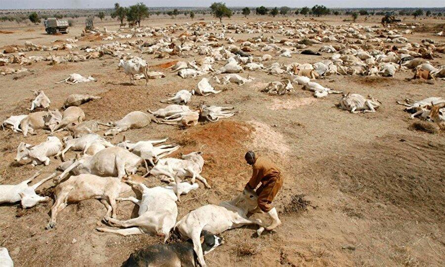 Doğu Afrika Kuraklığı (2011) Doğu Afrika'da son 60 yılın en kurak dönemi olarak kayıtlara geçen 2011 yazında 12,5 milyon insan kuraklık nedeniyle açlık ve ölümle yüz yüze geldi. Kenya, Somali, Etiyopya, ve Cibuti'de milyonlarca insanın kıtlıkla mücadele ettiği dönemde, bilhassa çocuklar, çok sayıda insan hayatını kaybetti.