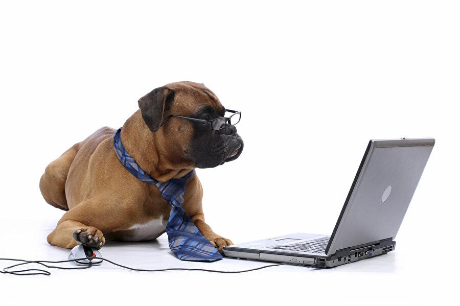 Google yöneticileri, şirketin politikaları gereği sürekli olarak köpek beslediği ve köpek içeren içeriklere kediye nazaran daha fazla önem verdiklerini açıkladı.