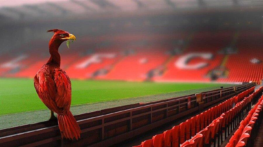İngiltere'nin Kuzeybatısının Liverpool şehrinde kurulan Liverpool FC, 1892 yılından bu yana armasını sürekli değiştirmiş ama amblemin ana karakteri olan 'Liver Bird'den asla vazgeçmemiş.