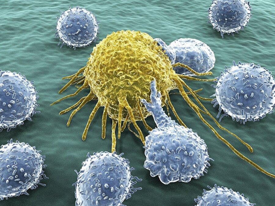 Kanser hücrelerinden koruyor                                                                                                                Günde tek bir fincan kahve bile kanser oluşumunu önlemede yardımcı oluyor.