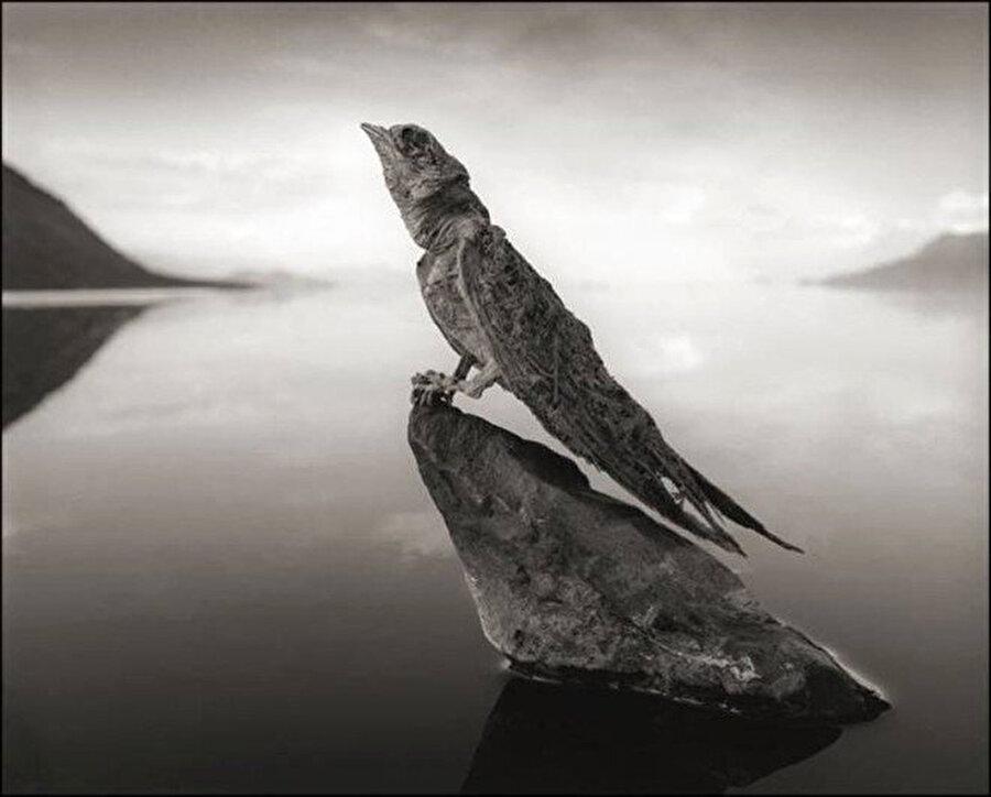 Natron Gölü'ndeki bu inanılmaz doğa olayını fark edip fotoğraflayan ise Nick Brandt.