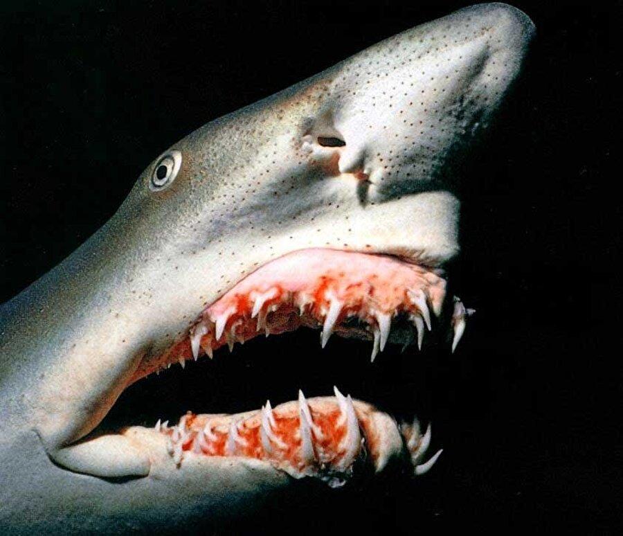 Goblin Köpekbalığı                                                                                                                                                     Derin okyanuslarda görülebilen ve bu okyanusların da en dibini tercih eden korkunç köpekbalığının önünde kılıcı andıran oldukça enteresan bir de uzantı bulunuyor…