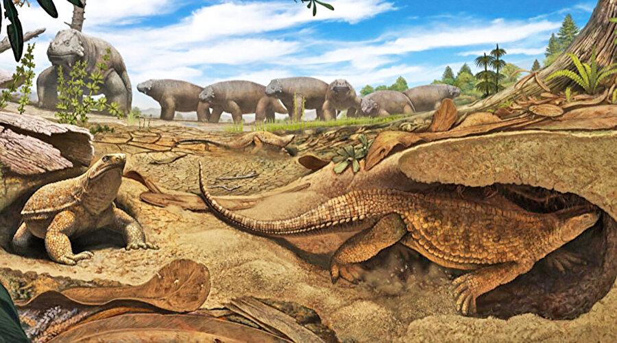 9. Güney Afrika'nın Karoo bölgesi , dinazor fosillerine ev sahipliği yapmaktadır. Bugüne kadar bulunan memelilere ait fosillerin yaklaşık % 80'inin Güney Afrika'daki Karoo bölgesinde bulunduğu tahmin edilmektedir.