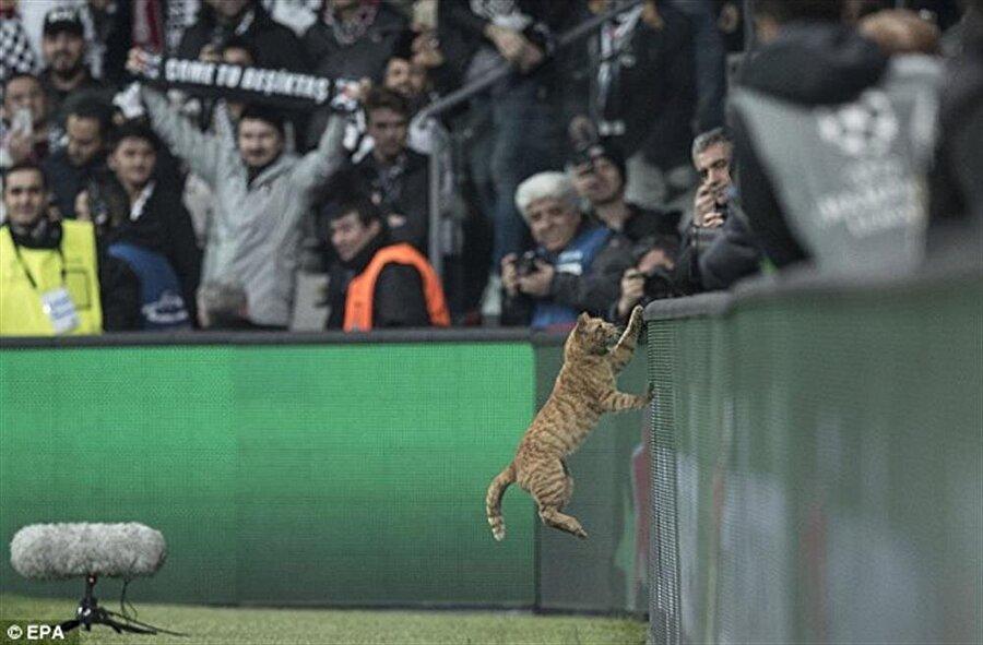 Videoda Beşiktaş-Bayern Münih maçında sahaya giren kedinin de görüntülerine yer veriliyor.