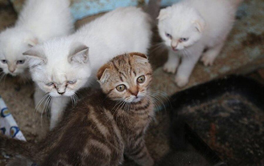Pet shoplarda hayvan ticareti yasal mıdır?                                                                           5199 sayılı kanunun 10. maddesine göre; satılırken hayvanların sağlık durumlarının iyi ve barındıkları yerin temiz olması zorunludur.