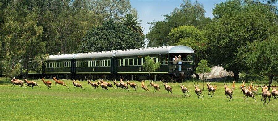 7) Tren, Güney Afrika'nın en nefes kesen manzaralarını , sofistike beş yıldızlı tesislerini, bu büyüleyici yolculuğa dahil ediyor