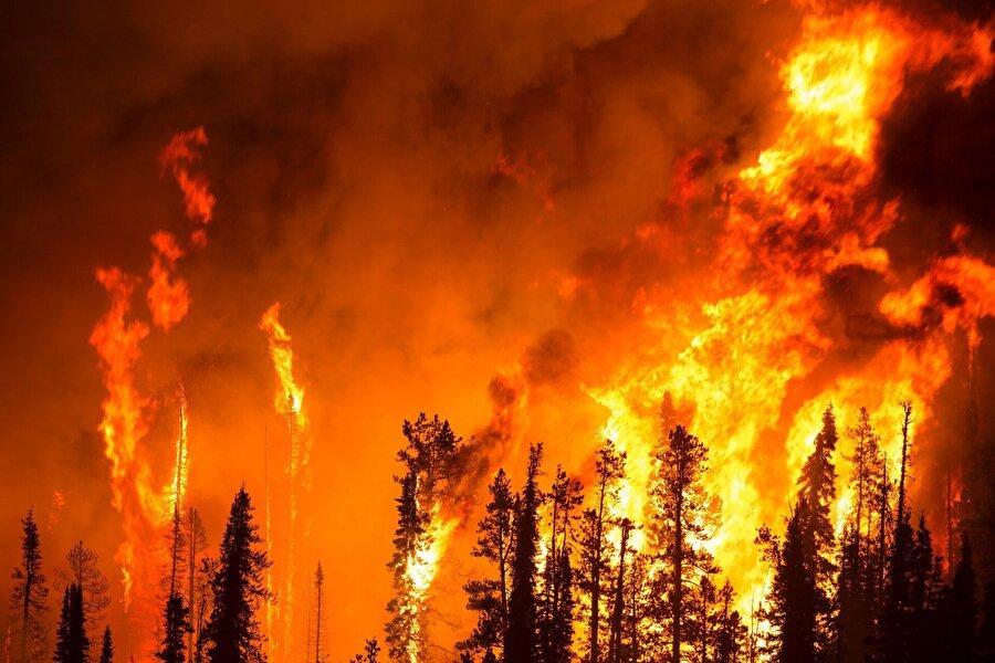 """Orman yangınları Yunanistan'ın başkenti Atina yakınlarındaki ormanlık alanlarda 23 Temmuz'da başlayan yangınların meskun bölgelere sıçraması sonucu 99 kişi yaşamını yitirdi, 187 kişi yaralandı, yüzlerce ev ve araç kül oldu.          Kanada'nın British Columbia eyaletinde 16 Ağustos'ta 566 noktada etkili olan orman yangınları nedeniyle olağanüstü hal ilan edildi.          Almanya'nın Brandenburg eyaletindeki Treuenbrietzen ile Jüterbog kentleri arasında ağustos ayında çıkan orman yangınından dolayı bölgedeki 3 köy tahliye edildi, yaklaşık 300 hektarlık alanın yandığı belirtildi.          ABD'nin California eyaletinde temmuz ayı sonunda kontrol altına alınamayan yangınlarda 8 kişi yaşamını yitirirken bin 500 bina kül oldu.California'nın kuzey ve güney kesimlerini 8 Kasım'da etkisi altına alan yangınlarda ise 88 kişi öldü, yaklaşık 200 kişiden haber alınamadığı bildirildi. Eyaletin kuzeyindeki Paradise kasabasında başlayan orman yangınları yaklaşık 14 bin ev, 514 iş yeri ve 4 bin 265 binayı yok etti.          Toplamda 620 kilometrekarelik alanı etkisi altına alan yangın, California tarihinin """"en büyük ve en çok can kaybının yaşandığı"""" orman yangını olarak kayıtlara geçti."""