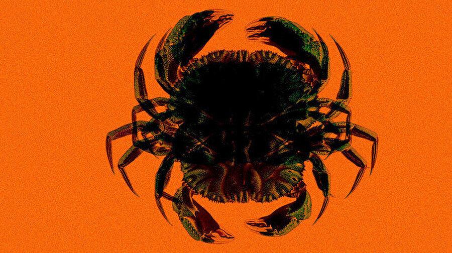 Deepwater Horizon'da gerçekleşen petrol sızıntısı deniz canlılarını olumsuz etkiledi Deepwater Horizon'da gerçekleşen petrol sızıntısı sonrası bölgede mutant türler ortaya çıktı. 1800 metrede gerçekleşen sızıntı sonrasında ortaya çıkan canlıların eksik organlara sahip olduğu belirtildi.