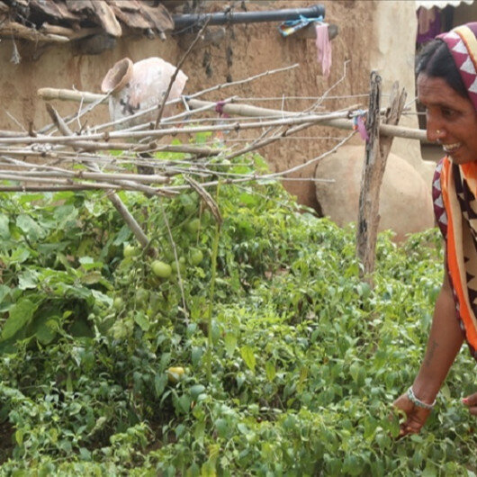 Kitchen gardens help indigenous in India combat malnutrition