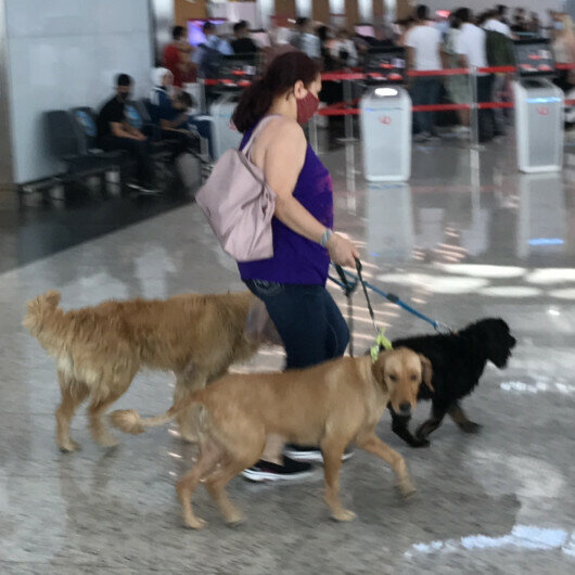 Istanbul Airport sets up check-in counter, special room for pets