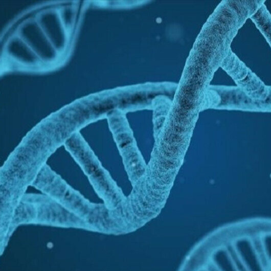 'Turkey bridge between East, West with its genetic structure'