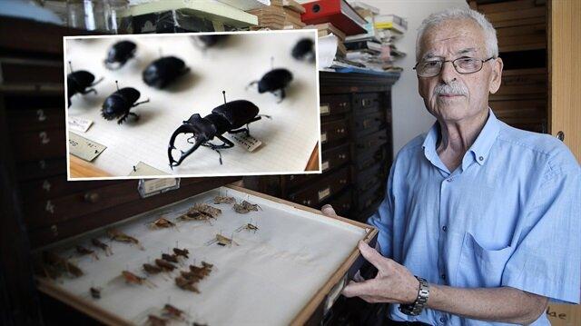 25 bin böceklik koleksiyon