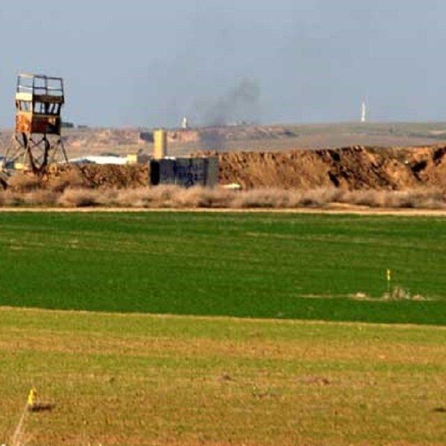 """بدء زراعة فاكهة """"الأناناس"""" الاستوائية في قطاع غزة لأول مرة"""