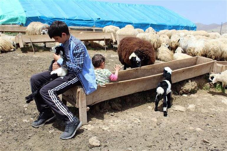 Habib Bitkin ve çobanlık yaptığı ahırı