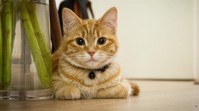 25 metrekarelik evde 130 kediyle yaşıyor