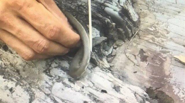 Yılanı yiyip sosyal medyada paylaşınca yakalandı