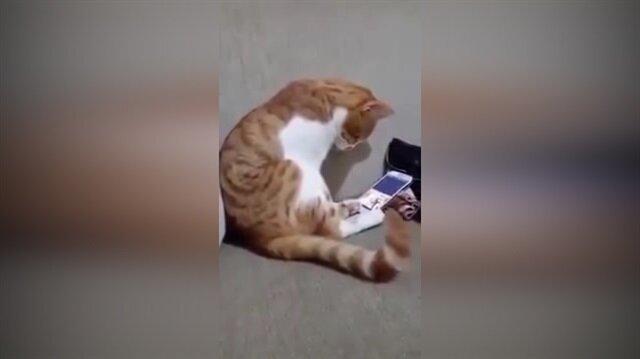 Ölen sahibini telefonda gören kedinin tepkisi