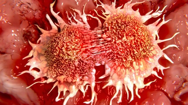 Tümörlü hücrelerdeki büyüme durdurulabilecek