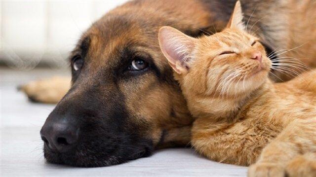 Hayvanların dünyadaki hakları
