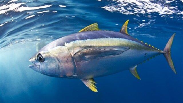 10 balıktan biri yurt dışına 'uçarak' gidiyor!