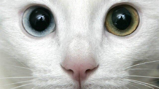 Kediden hastalık kaptı! Yaşlı adamın görüntüsü doktoru şok etti