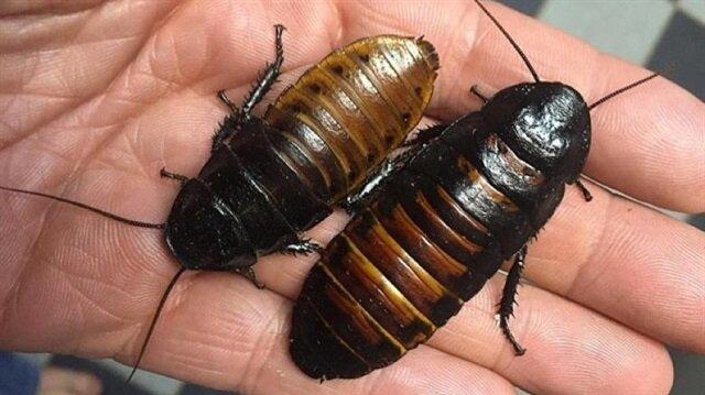 'Derimin altında böcekler var' deyip kollarını parçalayan kadının akıbeti belli oldu