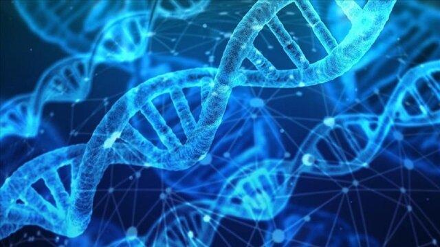Japonya insan embriyosunda genetik değişikliğe izin verecek