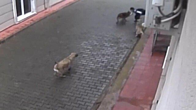 Sokakta dehşeti yaşadı: Aç kalan köpekler ilkokul öğrencisine saldırdı